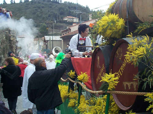 The festival of mimosa